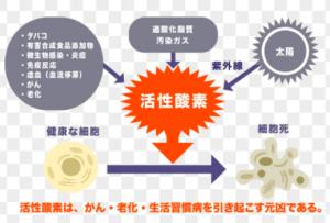 活性酵素の影響