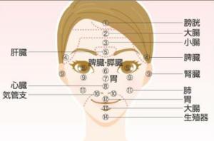 肌荒れと内蔵の関係のイメージ画像