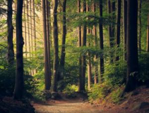 森のイメージ画像